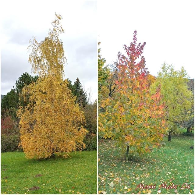 Gartenbaum im Oktober