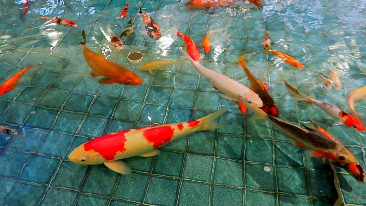 Mimpi Melihat Ikan Banyak