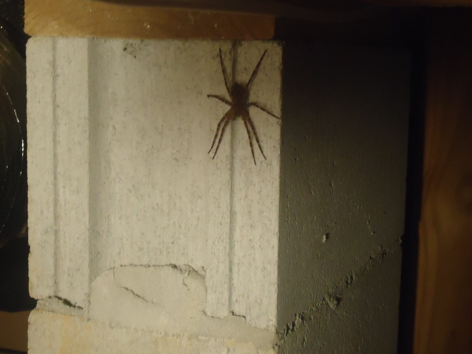 The Daily Dose of Deana: OMG. BIGGEST. SPIDER. EVER. :O