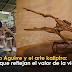 El arte de un pescador de raíces y troncos en Cubarral (Meta)