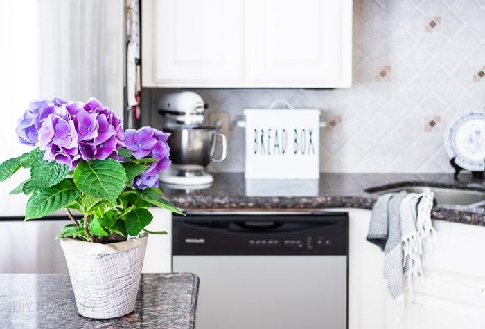 fresh hydrangea plant on kitchen counter