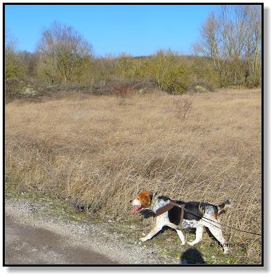 mit Beagle unterwegs
