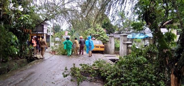 Hujan Deras Tumbangkan Pohon di Rantepao Hingga Menimpa Kabel Listrik