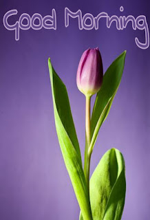 Good Morning Lily Flower images