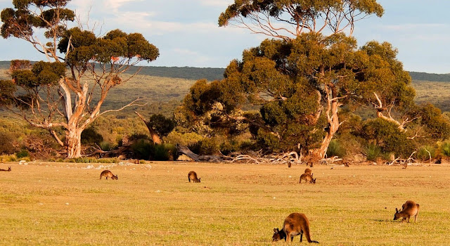 Tempat Wisata Kangaroo Island South Australia