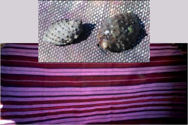 Colorante de caracol púrpura: Una práctica ancestral