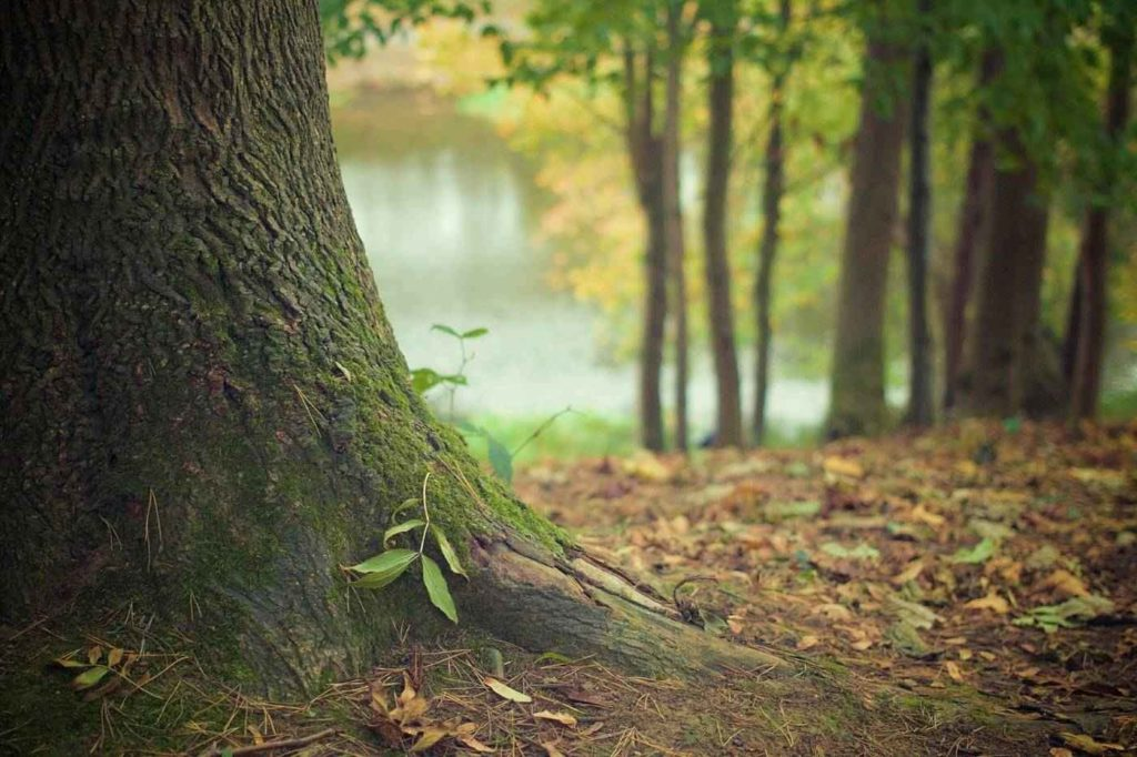 Trees have whole communities of other organisms associated
