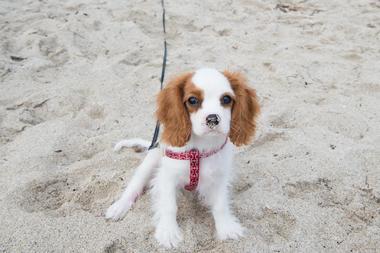 Walton Rocks Dog Beach