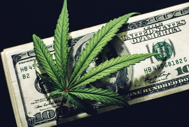 best marijuana business opportunities top cannabis startup opportunity