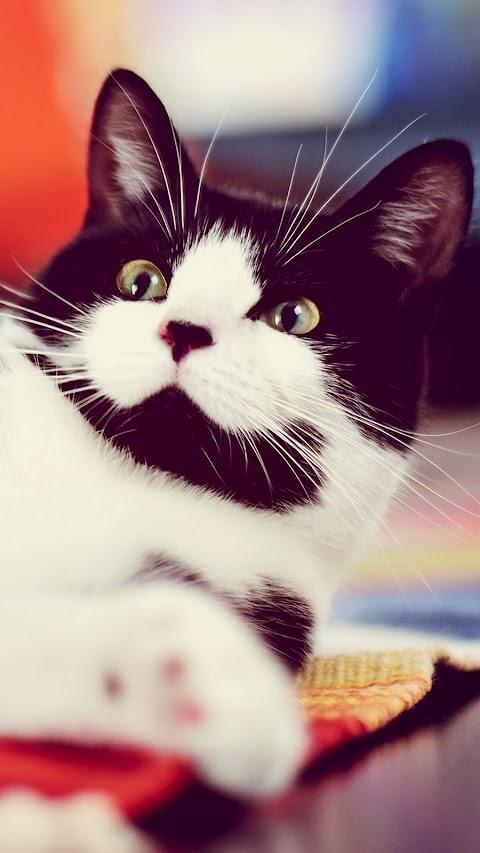 Cậu Mèo Bất Ngờ
