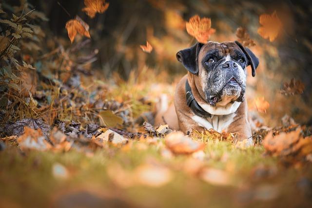 Problème de foie chez le chien