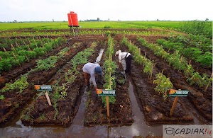 Terupdate! Simak Contoh Karya Ilmiah Pada Bidang Pertanian