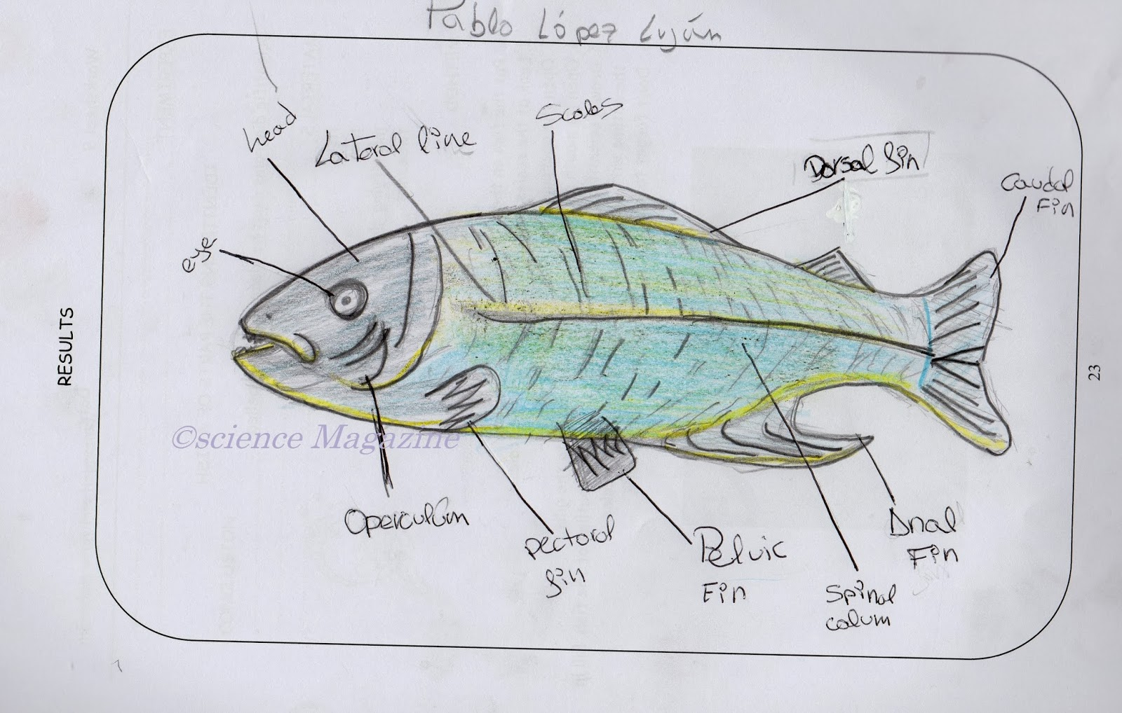 science magazine: studying the anatomy of a fish and ...  #4