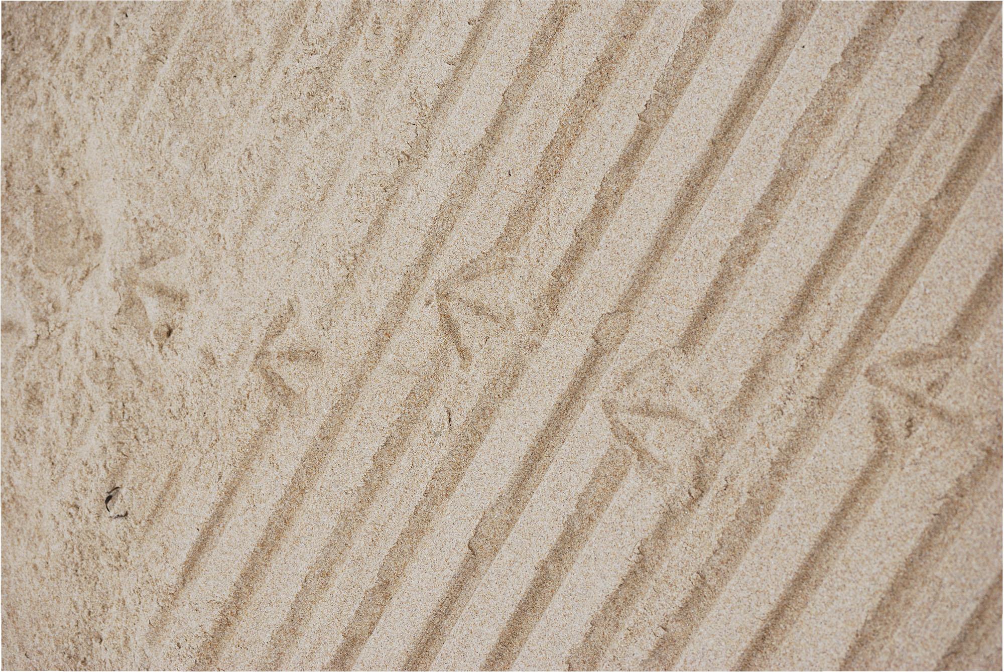seagull foot prints