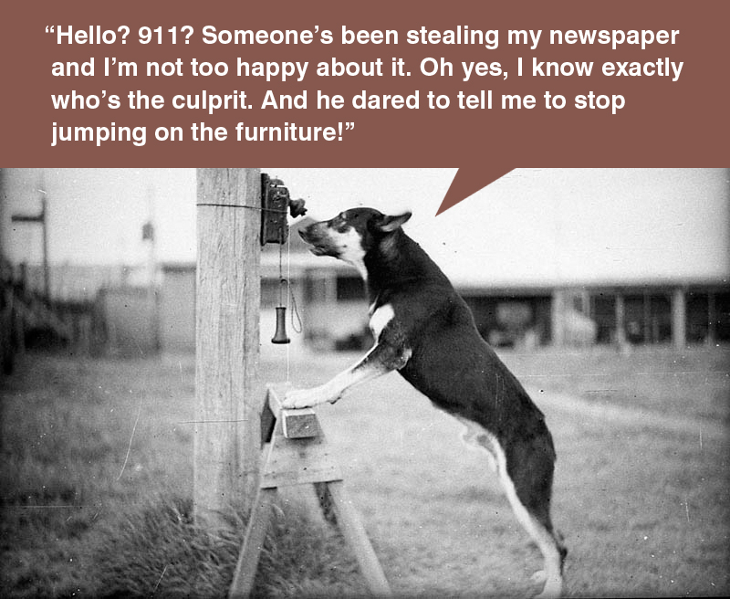 """""""Hello? 911? Someone's been stealing my newspaper and I'm not too happy about it. Oh yes, I know exactly who's the culprit. And he dared to tell me to stop jumping on the furniture!"""""""
