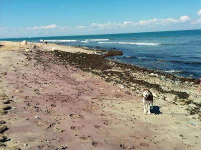 The dog friendly beach at the Montauk Lighthouse on Montauk Point, Long Island NY