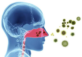 The purpose of the immune response is to protect against invasion by foreign organisms, but they often lead to host tissue damage.