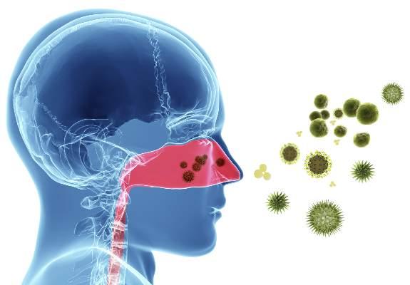 gafacom image result for allergic rhinitis