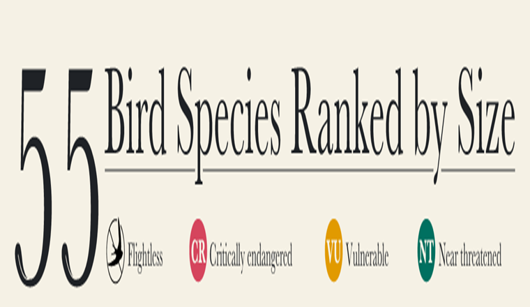 55 Bird Species Ranked by Size #infographic