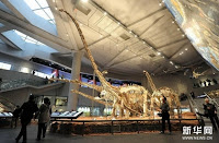 พิพิธภัณฑ์ประวัติศาสตร์ธรรมชาติ (Chongqing Museum of Natural History)