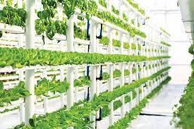 Organic Soil Nutrients