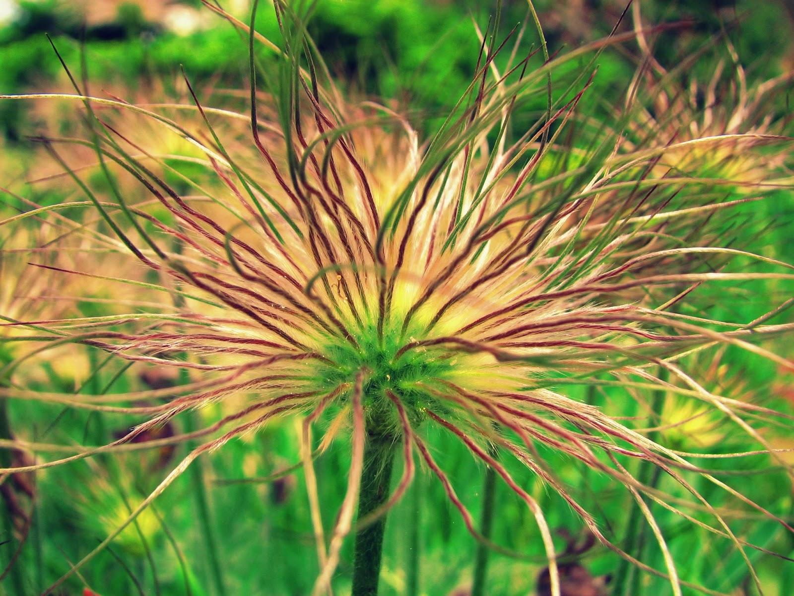 Flora montana: 2014