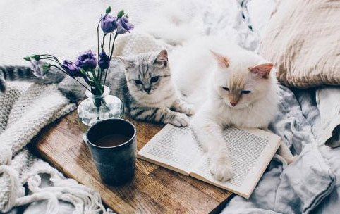 two cats lazing on a book