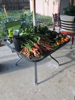Patio table full of an assortment of carrots and tomatoes