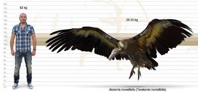 Tamaño Aiolornis incredibilis