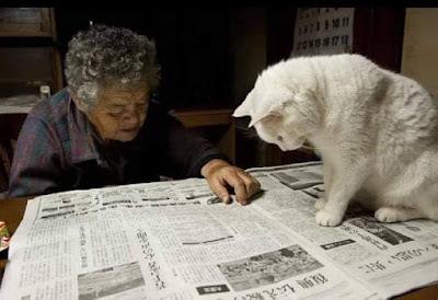 gatti vecchiaia amore