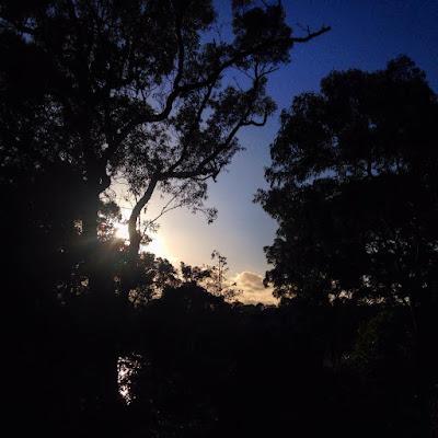 Sunrise at Oatley Park