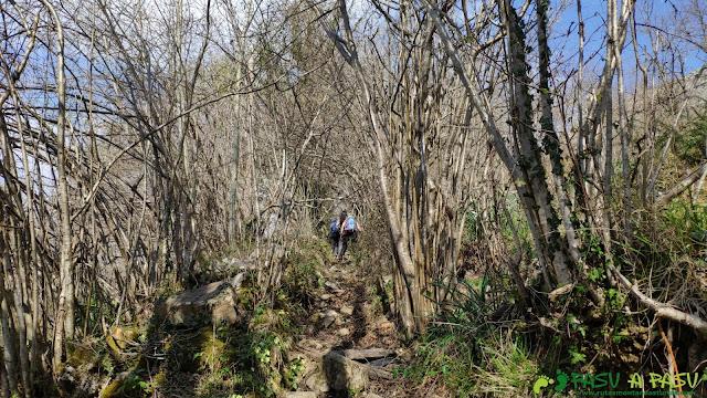 Sendero entre arbustos