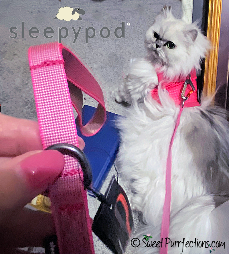 Silver shaded Persian cat laying on ground with harness and leash