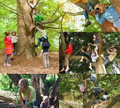 爬树 —— 精英教育课程