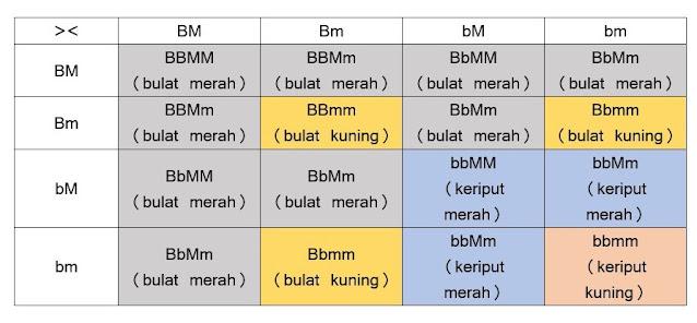 Contoh Hukum Mendel II
