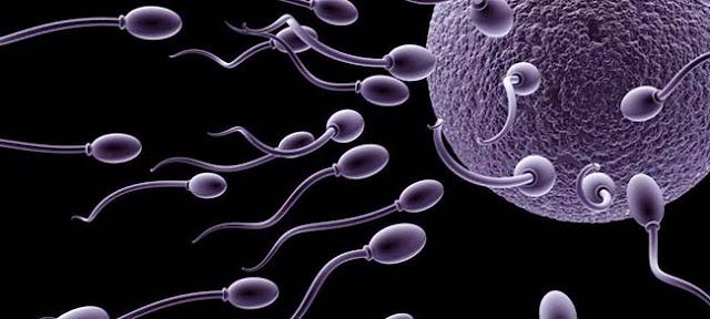 Cara Melindungi Sperma dari Sinyal WiFi