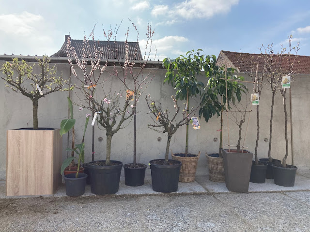 Fruitboom of perenboom kopen of huren prijzen op aanvraag in Brussel Limburg Vlaams-Brabant Antwerpen Gent