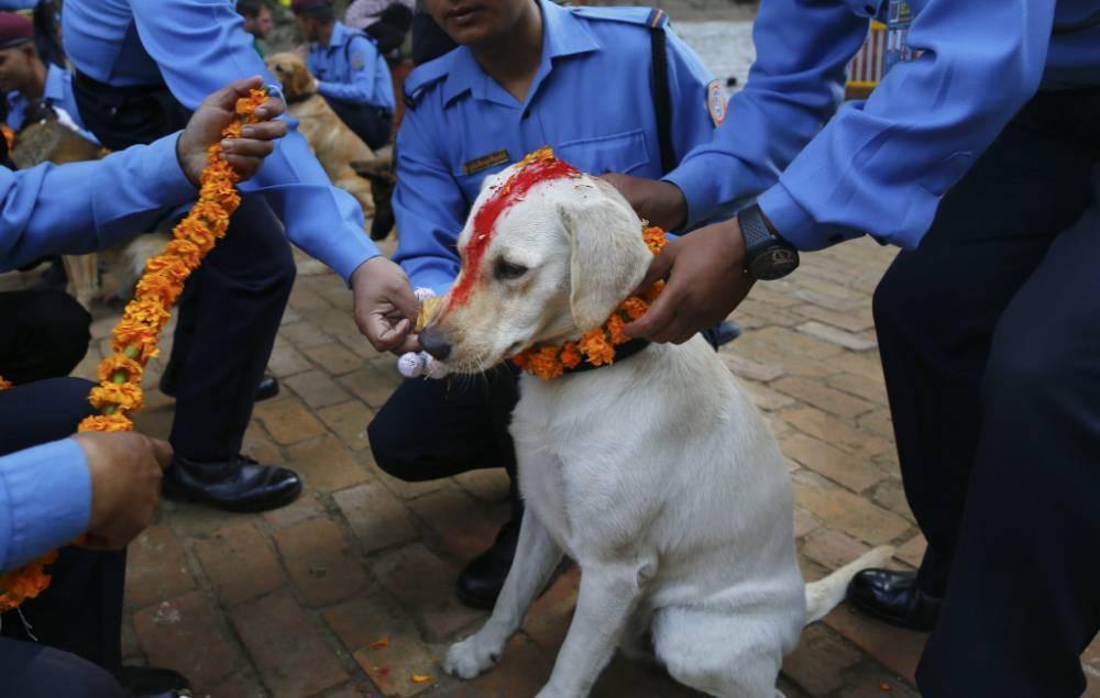 Image result for Kukur Tihar festival