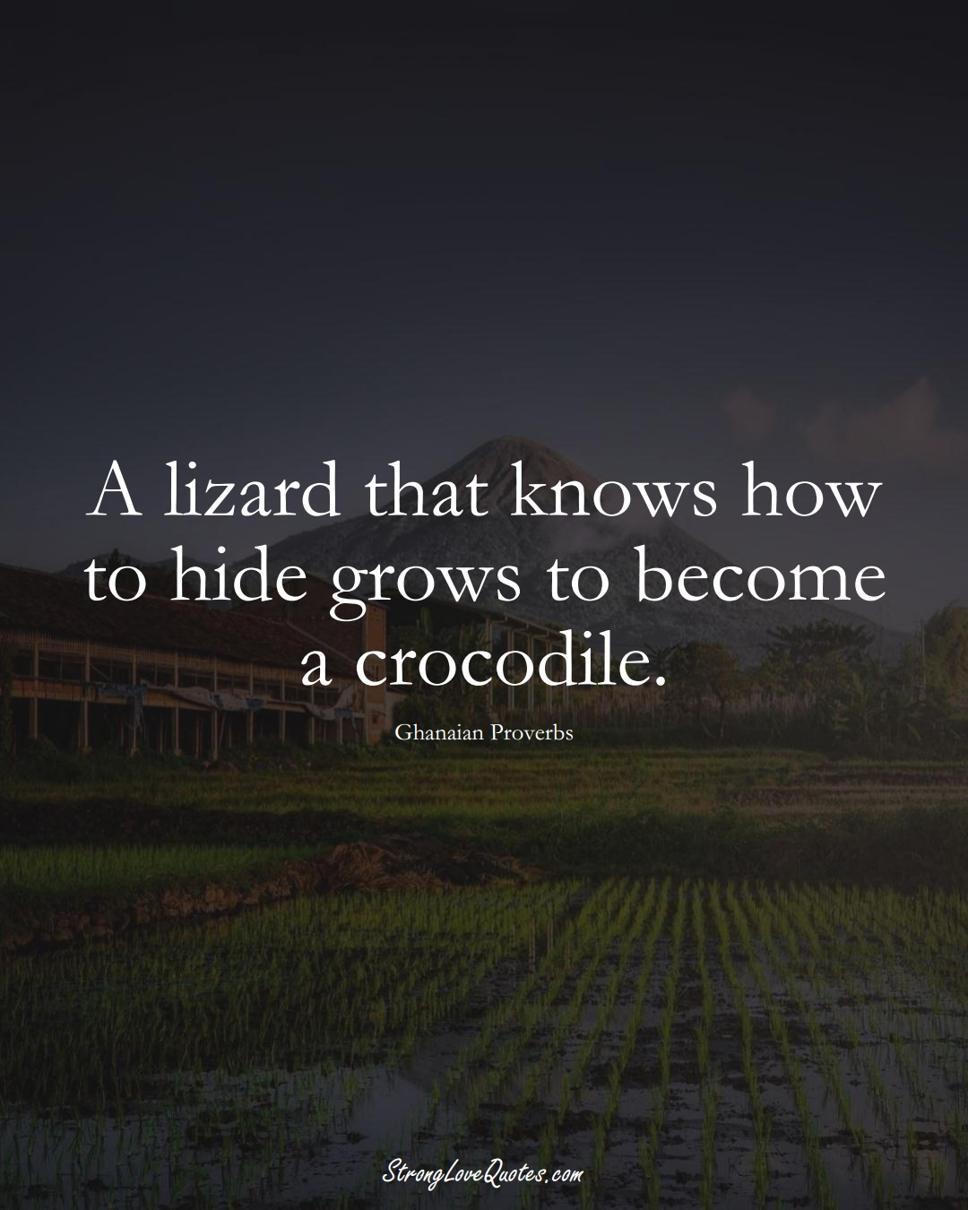 A lizard that knows how to hide grows to become a crocodile. (Ghanaian Sayings);  #AfricanSayings