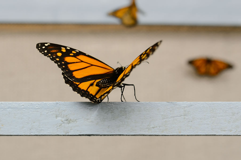 The Butterfly Experience at the Philadelphia Flower Show