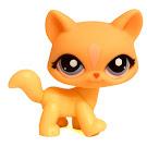 Littlest Pet Shop Blind Bags Cat (#1537) Pet