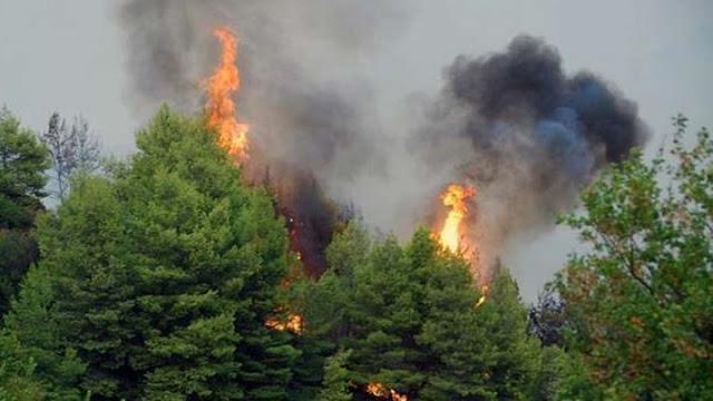 Πυρκαγιά σε πευκόφυτη περιοχή εκδηλώθηκε στην Ερμιονίδα