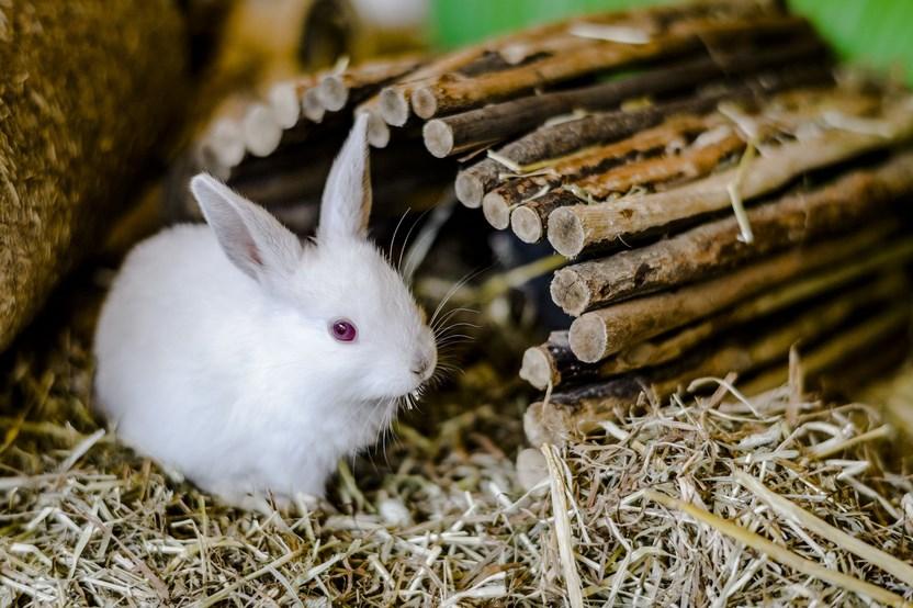 Petunjuk dan Metode Memelihara Kelinci disertai Tips dan Saran Bagi Para Pemula termudah