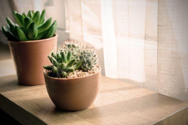 Φυτά με αγκάθια