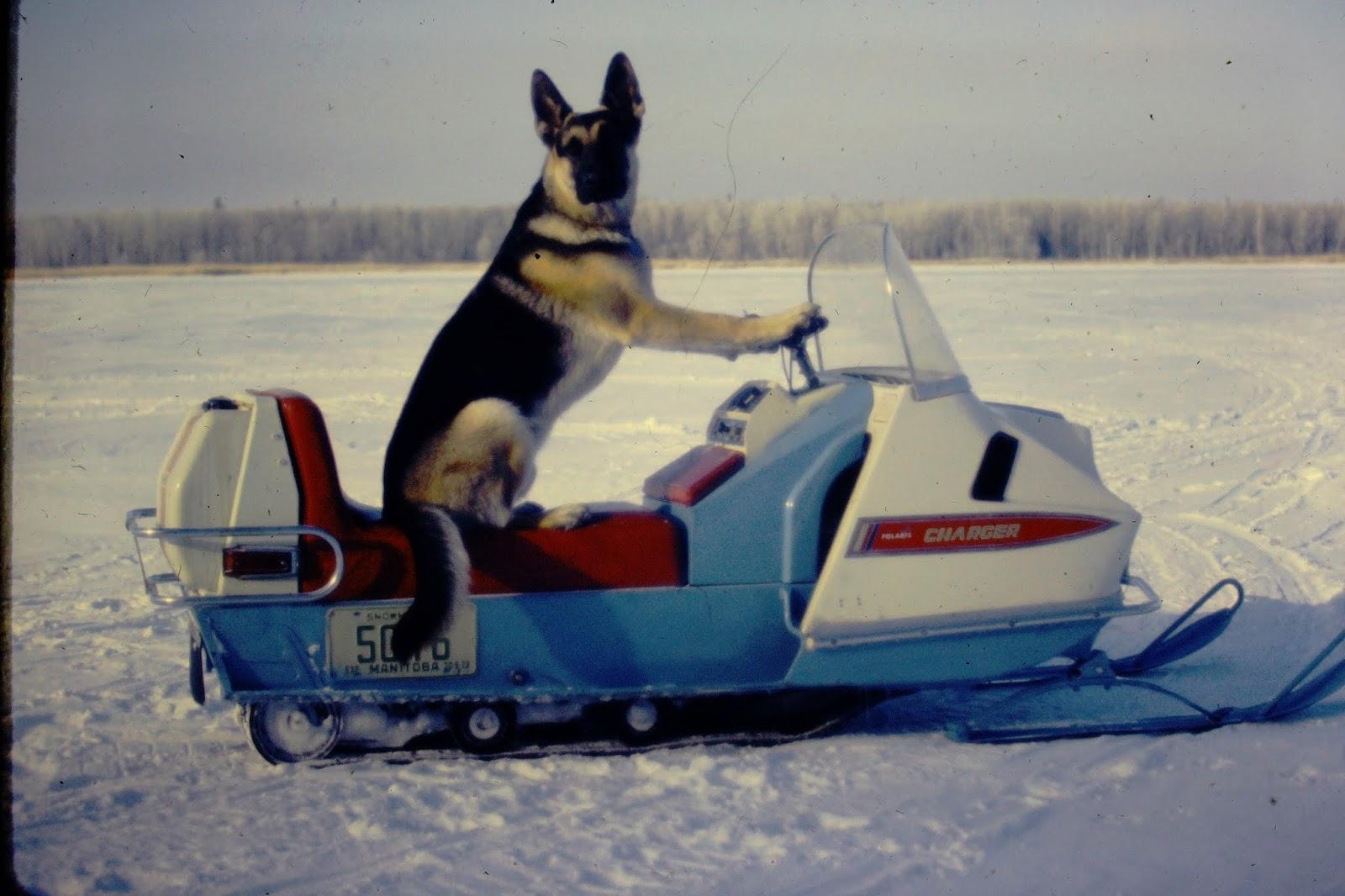 Snowmobiling Dog - February 1973