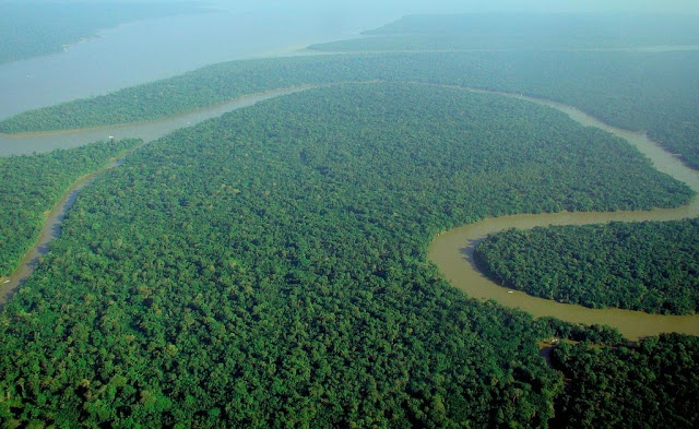 What is an interesting fact about the Amazon Forest?