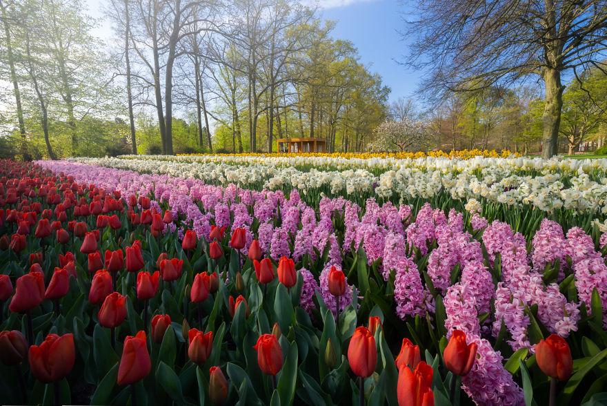 Keukenhof: The Most Beautiful Flower Garden In The World