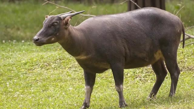 7-hewan-langka-indonesia
