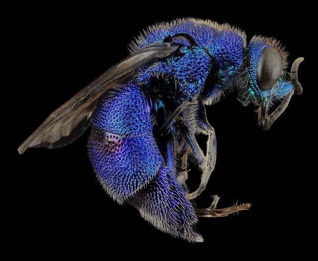 What do WASPS actually do?