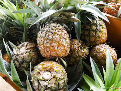 Mango Tours Tagaytay Paradizoo pineapples organically-grown products